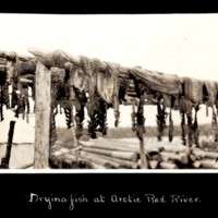 Drying Fish Along the Arctic Red River