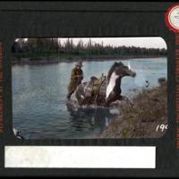 Magic Lantern Slide - Stuck Horse
