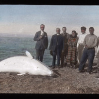 After the Whale Hunt